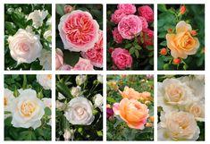 Geburtstagskarten ohne Text, alle Karten mit farbigem  Umschlag Flowers, Plants, Joie De Vivre, Florals, Planters, Flower, Blossoms, Plant, Planting