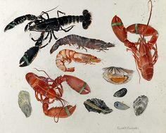 Watercolor painting by Elizabeth Blackadder of a few seas creatures like lobster, scallap,mussels and shrimp Sibylla Merian, Still Life Artists, Blackadder, Fish Illustration, Fish Art, Color Of Life, Sea Creatures, Watercolor Paintings, Watercolours
