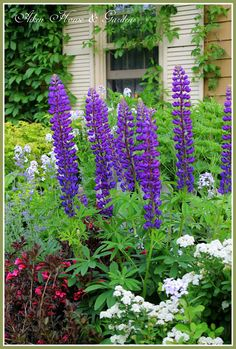 (via Aiken House & Gardens: Favorite Color Combinations in the Garden)