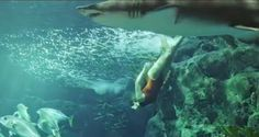 GOSSIP OVER THE WORLD: Video! Rihanna swims with sharks!