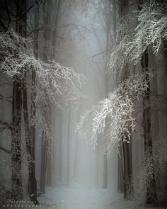 Mystical Snow Forest, Hungary  photo via ontheshores