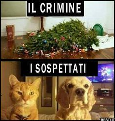 Un crimine. Haha Funny, Funny Jokes, Funny Animals, Cute Animals, Christmas Jokes, Spanish Humor, Humor Grafico, Funny Video Memes, Funny Pins