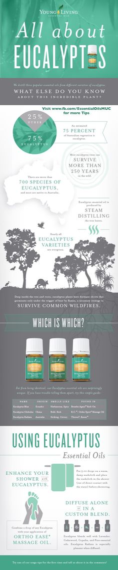 All about Eucalyptus With three different Young Living essential oils bearing its name, there's a good chance you've heard of eucalyptus. What else do you know about this amazing plant?   Alles über Eucalyptus Mit drei verschiedenen Young Living ätherische Öle die diesen Namen tragen, es gibt eine gute Chance, dass Sie von Eukalyptus gehört haben. Was wissen Sie sonst noch über diese erstaunliche Pflanze?  Young Living Independent Distributor E-mail: essential.oils.munich@gmail.com