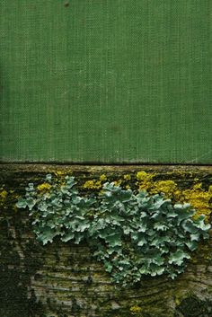 love this print by roger j porter - a book about moss and lichen vol. 1
