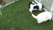 Hi Cat, We Are Dogs, We Love You! gif