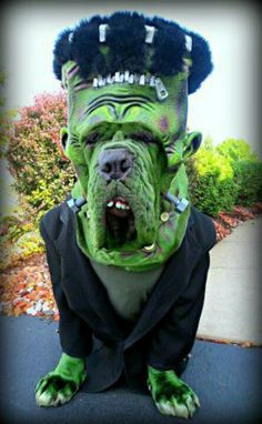 Pet costume · Funny Dog Halloween ... & How to Dress Your Dog like a Latte for Halloween | Dogs and Cats in ...