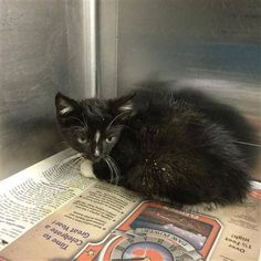 Crossposting to save lives: Panda: Sweet stray is running out of time at Concord kill shelter