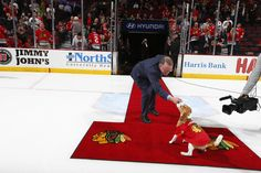 Westminster Kennel Club Dog Show winner Miss P was welcomed by the fans at the United Center.