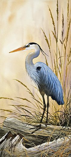 The delicate natural beauty of a secluded, quiet resting place for a blue heron along a bright driftwood shore. An original watercolor painting by Fine Art America artist James Williamson recreated as a fine art print by Fine Art America.