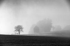 morning fog - Fall morning Autumn Morning, Niagara Falls, Nature, Travel, Landscapes, Naturaleza, Viajes, Trips, Nature Illustration