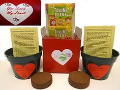 NEW! You Tickle My Heart TickleMe Plant Valentine's Day Gift Box - To Grow the TickleMe Plant that closes its leaves when you Tickle it and when you blow it a KISS! (Adult TickleMe Plant can even produce sparking pink flowers) Grows indoors year round! TickleMe Plant  ou Tickle My Heart TickleMe Plant Valentine's Day Gift Box - To Grow the TickleMe Plant that closes its leaves when you Tickle it and when you blow it a KISS! http://amzn.to/18aaTrA