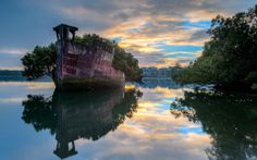 A 101 year old floating boat sprouting a forest ins Homebush Bay, Sydney