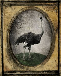 'Sir Chandler' Ostrich Art photo  Sir Chandler  8x10 by The Lonely Pixel Photography on Etsy