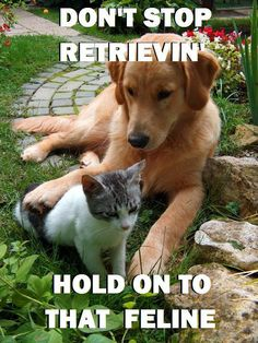 Don't stop retrieving. Hold on to that feline.