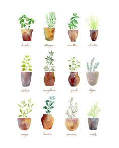 Culinary Herbs Art Print by Sandra Ovono - Watercolor Art Studio | Society6