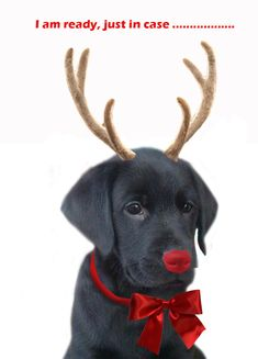funny dog christmas card quotes ; christmas-dog-replacing-Rudolph.jpg 850×1,181 pixels