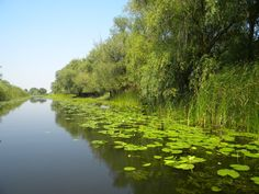 Danube Delta read Danube Delta, How To Get Rid, Nature, River, Green, Pictures, Outdoor, Us National Parks, Romania