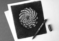 pine cone illustration for an upcoming album release