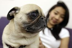 """College freshman suffering from separation anxiety, take heart: The federal government says universities have an obligation to admit """"emotional support"""" animals into school housing. Unlike service animals, which are trained to perform tasks to assist peop Dog Separation Anxiety, Dog Anxiety, Leiden, Dog Food Online, Emotional Support Animal, Dog Training Classes, Dog Insurance, Cat Behavior, Therapy Dogs"""