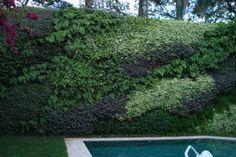 Horizonte verde nos jardins verticais!!!