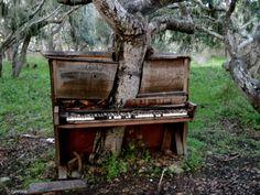Piano Tree, Monterey, California  Tree growing thru piano??
