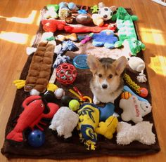 """""""Ruff!"""" """"I am Not a Spoiled Brat!"""" """"I only assist with the the Buying at Pets Mart !"""" ~Corgi"""
