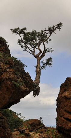 """Gives new meaning to the term """"living on the edge""""  looking at that tree Yes indeed it does   Wow a survivor  hanging in"""