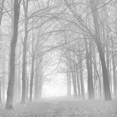 Morning Mists Iv Photographic Print by Doug Chinnery at Art.com