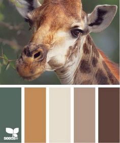 giraffe tones what better palette for a safari room Pantone, Colour Schemes, Color Combos, Color Palate, The Design Files, Design Seeds, Color Swatches, Color Theory, House Colors