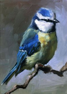 Blue Tit Original oil painting by shaunafinnart on Etsy