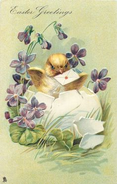 EASTER GREETINGS  chick in egg with envelope in beak, violets around