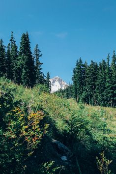Wildflowers and Waterfalls on the Mountain Location: Elk Meadows - Mt Hood Wilderness, OR Date: August 9th, 2014