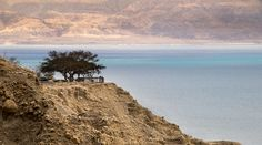 Dead Sea and lonely tree