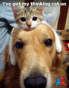 I've got my thinking cat on