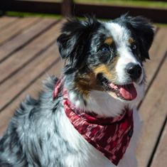 Ready to help furry friends and look gorgeous? Did you know that we donate of every purchase directly to BAWA? Dog Beach, Dog Bandana, Bandanas, Dog Accessories, Looking Gorgeous, Bali, Collars, Pup, Friends