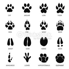 Vektorgrafik : Animals footprints