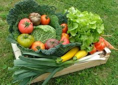 Improve Performance With Vegetables Organic Gardening, Horticulture, Permaculture, Garden Trees, Agriculture, Little Garden, Potager Garden, Hydroponics, Gardening Tips