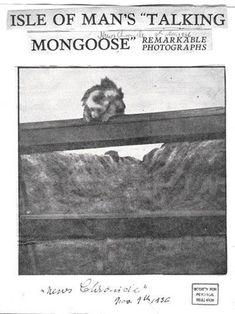 Gef the talking mongoose   Thinking Sideways Podcast