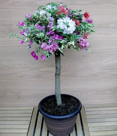 """The Bougainvillea Garden Party Patio tree, from Hines Growers, is a perfect example of the trend. These are grafted topiary trees with a round head of foliage, standing about 18 inches tall. Growing well in zones 9b to 11, the """"trees"""" flower as long as its warm, with blooms in shades of red, pink, orange, purple, and white."""