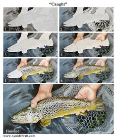 """Step-by-step watercolor painting how to. Progress photos of painting a trout fish. """"Caught"""" by Lynn D. Pratt. See more on my site: http://lynndpratt.com/the-process.html"""