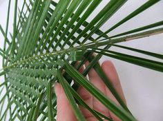 Twin Leaf Weave from http://www.christinedebeer.ca/twin-leaf-weave