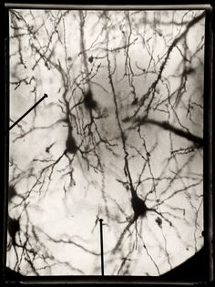 """The illustrations of Santiago Ramón y Cajal, the father of modern neuroscience, are featured in the new book """"The Beautiful Mind."""""""
