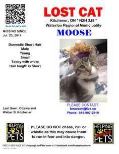 Lost Cat - Domestic Short Hair - Kitchener, ON, Canada