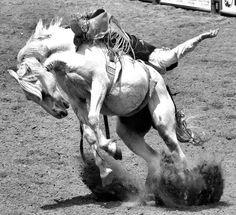 Bucking Horse by Marvin Bredel, via Flickr  Tattoo Inspo