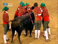 Forcados (A arte de pegar touros)- Portugal Forcados the art to garc bulls - Portugal http://tourada-portugal.blogspot.pt/