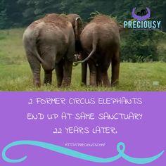 Sometimes you just need a hug! A great big elephant hug! Truly heartwarming!  http://blog.theanimalrescuesite.com/elephants-reunite/?utm_source=ars-arsfan&utm_medium=social-fb&utm_term=20161021&utm_content=link&utm_campaign=elephants-reunite&origin=ars_arsfan_social_fb_link_elephants-reunite_20161021