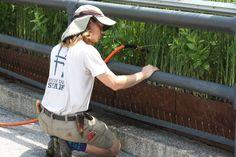 High Line in New York, NY High Line, New York, Park, Fashion, Moda, New York City, Fashion Styles, Parks, Nyc