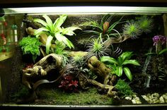 dare to be different allow our terrariums to turn your workplace into ...