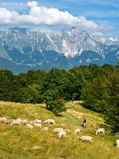 Mountain bike day tour:  BEST SINGLE TRAILS OF SOČA VALLEY: Discover the amazing trails in the alpine paradise around Bovec & Kobarid! #slovenia #mtb
