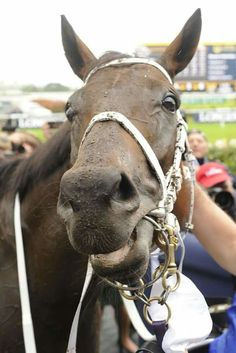 16 straight wins and now over $10 million in prizemoney, Winx looks pleased with her day's work!